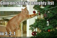 #funny #meme #catmeme