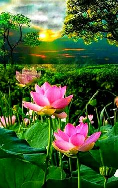 Hello everyone,Welcome to Beautiful Pictures community, Thanks for joining us Lotus Flower Pictures, Flower Images, Exotic Flowers, Beautiful Flowers, Lotus Flowers, Beautiful Pictures, Water Garden Plants, Aquatic Plants, Amazing Nature