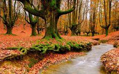 otoño, hojas, amarillo, arroyo verde, raíces, árboles, río, musgo wallpaper