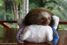 Tender sloths. | The 29 Cutest Sloths That Ever Slothed