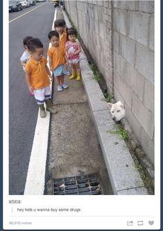 lol, haha, tumblr, funny, humour