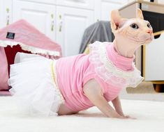 Cat Clothing, Summer Clothing, Cute Hairless Cat, Sphynx Cat Clothes, Cat Dressed Up, Cat Dresses, Kittens Cutest, Lace Skirt, Cotton Fabric