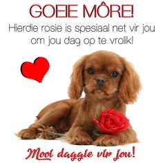 Hierdie rosie is spesiaal net vir jou om jou dag op te vrolik! Good Morning Wishes, Good Morning Quotes, African Jokes, Teddy Day Images, Lekker Dag, Goeie More, Afrikaans Quotes, Cute Messages, Deep Thoughts