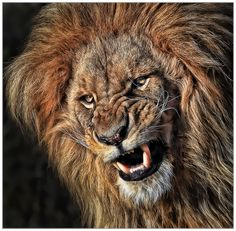 Don't you dare to put this on 500px! by Klaus Wiese, via 500px