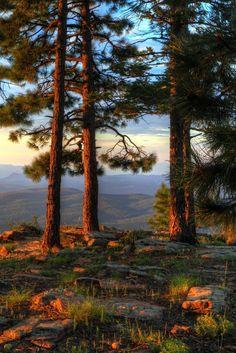 Listening For Answers by John Morey (Mogollon Rim near Strawberry, Arizona)