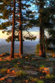 Listening For Answers by John Morey  (Mogollon Rim near Strawberry, Arizona)