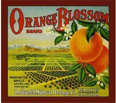Orange Blossom Brand Oranges, Redlands, CA
