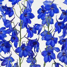 Wall mural - Blue Flowers