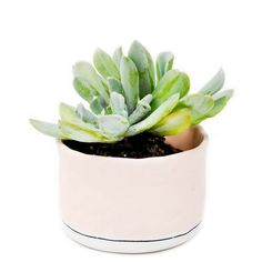 Pastel Mini Planter ($36) ❤ liked on Polyvore featuring plants, fillers, item, plantas and растения
