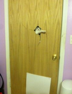 Let Me In Now
