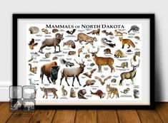 Mammals of North Dakota Poster Print / North Dakota Mammals | Etsy Ground Squirrel, Fox Squirrel, Flying Squirrel, Eastern Gray Squirrel, Animal Dictionary, Striped Skunk, Snowshoe Hare, American Black Bear