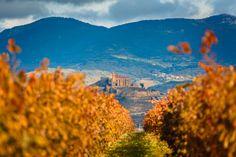La #Rioja (#España) en otoño. #enoturismo en su maximo esplendor (Foto @Joan Vendrell)