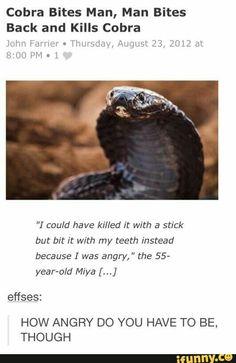 killing a cobra clean funny
