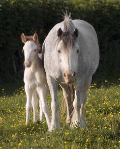 Tom Price's Fields - Speckled Mare & Foal
