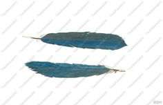 Bluebird Feathers by TwoMoonzArt on Etsy, $33.00