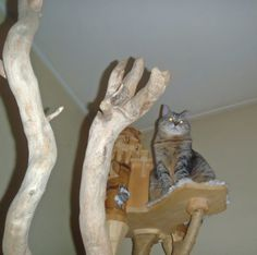 DomusfeliS - special playzones for cats - Unique pieces for unque cats, sculptures for cats, untreated precius wood: plum, apricot, poplar, birch,bamboo, oak and piracanta. #catcastle #castlecat #cattower #catcondo #cattree #felinelovers #catenclosure #cattoy #petdesign #amazingcat scratching #catscratchforniture #cathome Plum Apricot, Cat Castle, Sculptures, Lion Sculpture, Cat Playground, Cat Enclosure, Cat Condo, Cat Tree, Animal Design