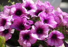 flower, spring