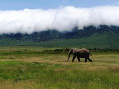 30 Gorgeous Wildlife Photos That Will Transport You To The African Savannah