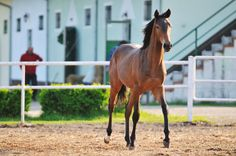 Preparing a Horse for Sale