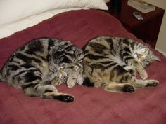 Her beloved cats Bob & Buttons - raised by Mum from 3 days old.