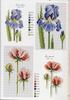 Blue Iris & Poppy