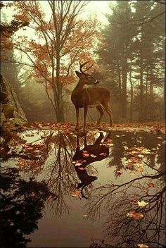 Young deer in the sublime beauty of Autumn.