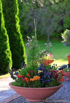 great color container garden