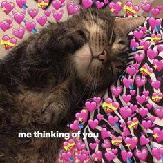 I feel a little better this morning so I'll probably post more:)) Cute Cat Memes, Cute Love Memes, Funny Cats, Funny Memes, Pretty Meme, Love You Meme, Heart Meme, Boyfriend Memes, Crush Memes
