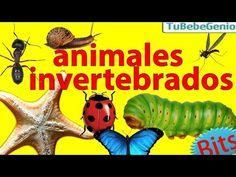 Animales Invertebrados para Niños   Bits de inteligencia + Lectura (inve...