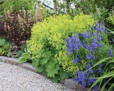 Daggkåpan är fin just nu! ⠀ The Alchemilla mollis is looking good at the moment. ⠀ ⠀ #Länsmansgårdendesign #garden #lansmansgarden #gardendesign #gardendesigner #gardeninspiration #have #hage #jardin #garten #trädgård #trädgårdsdesign #giardino #trädgårdsdesigner #trädgårdsdesign #landscaping #landscapingdesign #blomster #daggkåpa #alchemillamollis #border #grus #sommarpålänsmansgården #junipålänsmansgården #gravel #heuchera #alunrot #bergenia #perenner #perennials