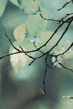 Colors ~ Mint Green