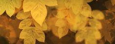 Nature Leaf Brushes