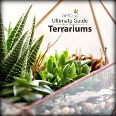 How do you care for terrariums? How do you make one? Find out here.