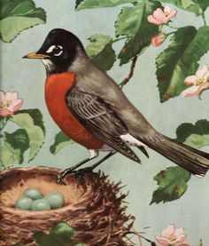 Red Robin from children's book.  Published 1948.