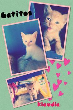 Tres #gatitos :)