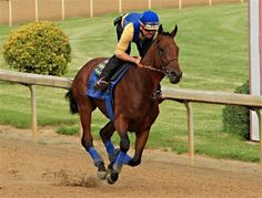 2015 Preakness: American Pharoah and Dortmund draw posts along the rail Bob Baffert, The Belmont Stakes, Demolition Derby, Preakness Stakes, Triple Crown Winners, Derby Winners, American Pharoah, Merchant Marine, Horse Racing