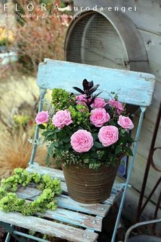 Pink roses in galvanised bucket