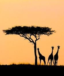 Ethiopia! Study Abroad | #GlobalGators! Visit the #UFIC website for program information: http://ufic.ufl.edu/