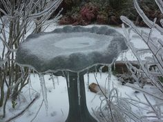 Ice storm bird bath