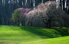 brookside gardens images | Brookside Gardens Spring Trees