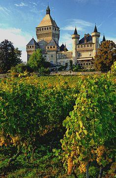 vineyards, Vufflens-le-Château, La Cote, Vaud, Switzerland