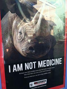Save the Rhino @Peggy Keeling the Rhino International @WorldRhinoDay ...