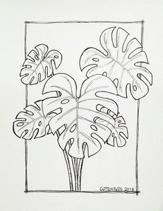 # day 18 A Plant Leandro Guttemberg Adam's Rib drawing mostera plant drawn Doodle Drawings, Easy Drawings, Doodle Art, Drawing Sketches, Drawing Drawing, Arte Sketchbook, Plant Drawing, Plant Art, Inktober