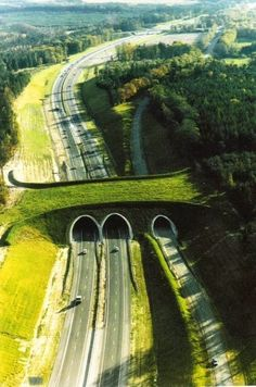 Funny pictures about Wildlife bridge in the Netherlands. Oh, and cool pics about Wildlife bridge in the Netherlands. Also, Wildlife bridge in the Netherlands. Wild Life, Mundo Design, Parcs Canada, Beautiful World, Beautiful Places, Natural Bridge, Thinking Day, Banff National Park, Animal Crossing