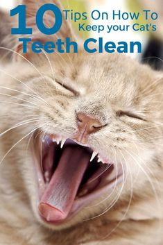 Unlike us, cats can't brush their teeth... Here are 10 ways to establish good dental hygiene.
