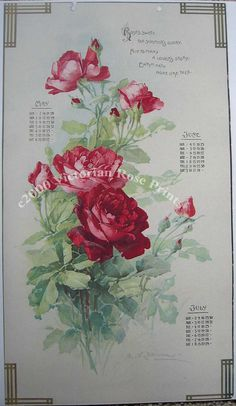 Huge Discount, Roses, Art Print, Catherine Klein. Calendar, Half Yard Long, CP231, Shabby Chic Decor