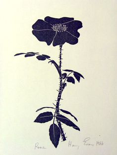 Rose (briar rose?) - The McCune Collection: Henry Evans - Volume 17 (1966)