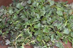 Mancare de urzici cu usturoi - CAIETUL CU RETETE Plants, Planters, Plant, Planting