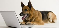 Frankie the German Shepherd Can Sniff Out Thyroid Cancer | Jackie's Space