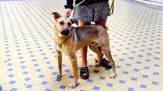 """La inspiradora historia de """"Balcarce"""", el perro de la calle que adoptó Macri   Argentina"""